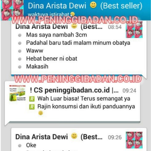 dina arista 2 (Copy)